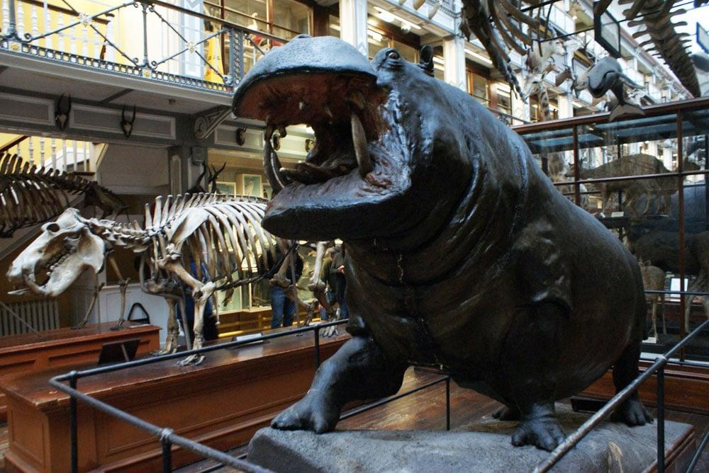 Musée d'histoire naturelle de Dublin