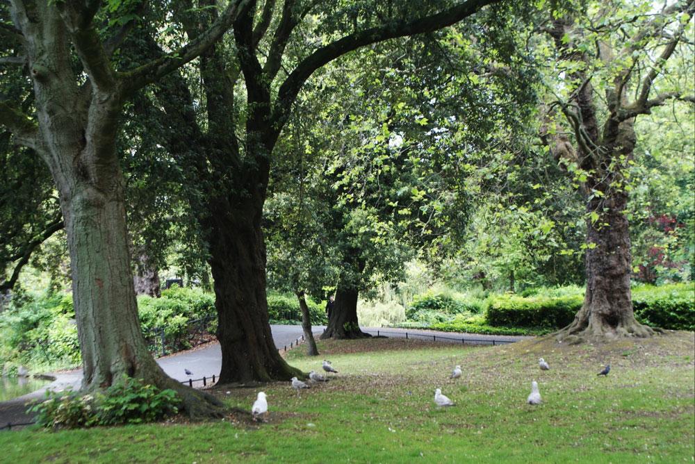 Dans le jardin Stephen's Green à Dublin.