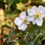 Jardin botanique d'Edimbourg : La nature dans toute sa beauté [Stockbridge]