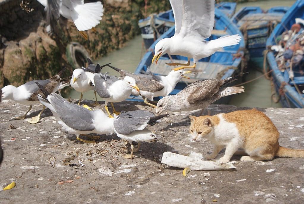 > Illustration parfaite : Le chat c'est les Portugais venus discrètement (mais pas trop) s'installer, les mouettes ce sont les habitants du coin.