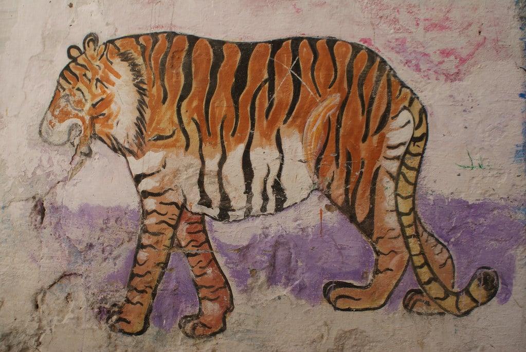 > Un tigre devenu grassouillet à force de tajine sur un mur d'Essaouira.