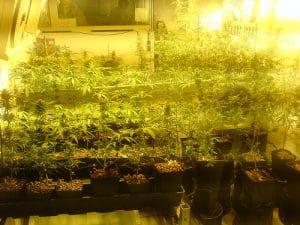 Musée du Cannabis à Amsterdam [Quartier rouge / Vieille ville]