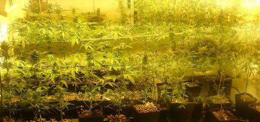 Musée du cannabis à Amsterdam - Photo de Method Dan