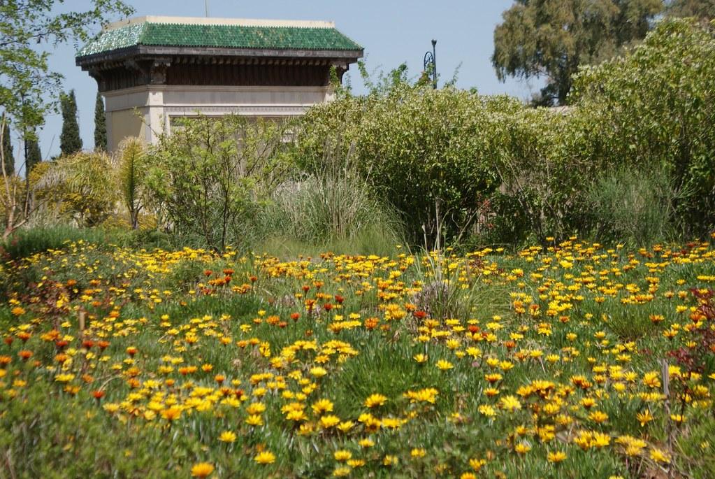 Parterre de fleurs dans le jardin Jnan Sbil du quartier de Jdid à Fès.
