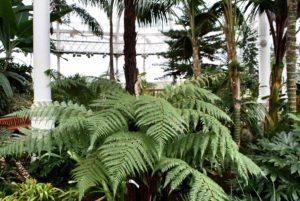 People Museum Palace de Glasgow : Botanique et histoire [East End]