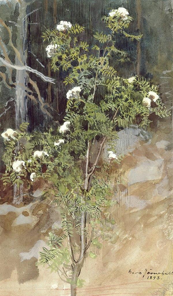 Oeuvre d'Eero Järnefelt (1893) dans le HAM, Helsinki Art Museum.
