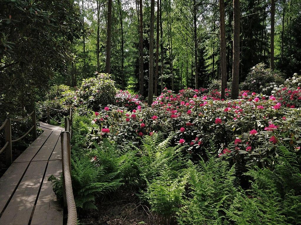 Parc des rhododendrons à Helsinki - Photo de Rutlandbaconsouthamptonshakespeare
