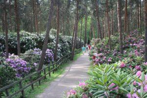 5 parcs et jardins à Helsinki : Beaux, insolites, sauvages et surprenants