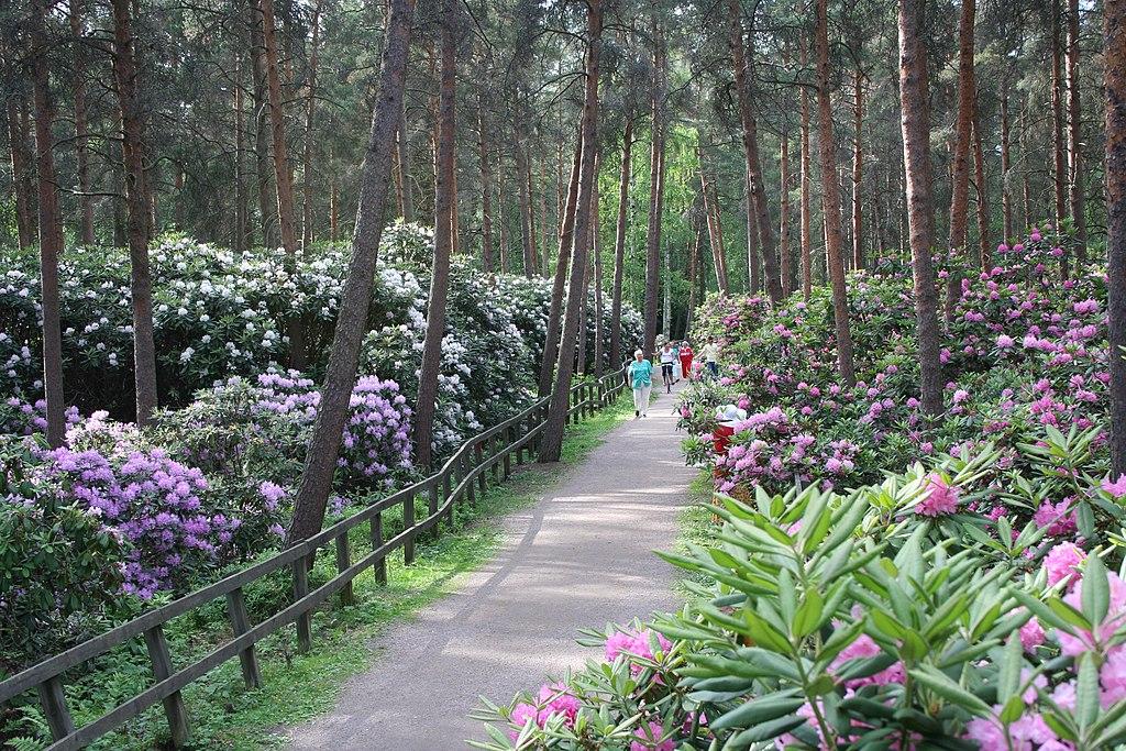 Parc des rhododendrons à Helsinki - Photo de Ninara