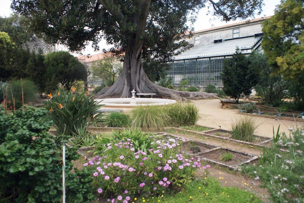 Partie haute du jardin botanique d'Ajuda à Lisbonne.