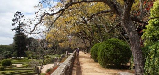 Jardin botanique d'Ajuda à Lisbonne