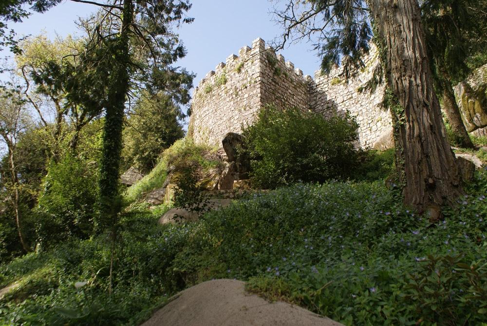 A l'intérieur du Chateau des Maures à Sintra, murailles et arbres centenaires.