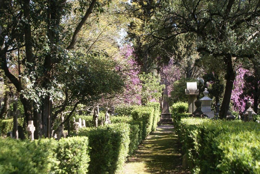 Allée de buis du cimetière des Anglais de Lisbonne.