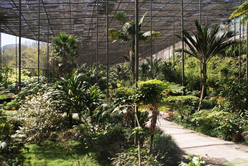 Serre froide du jardin botanique d'Estufa fria à Lisbonne.