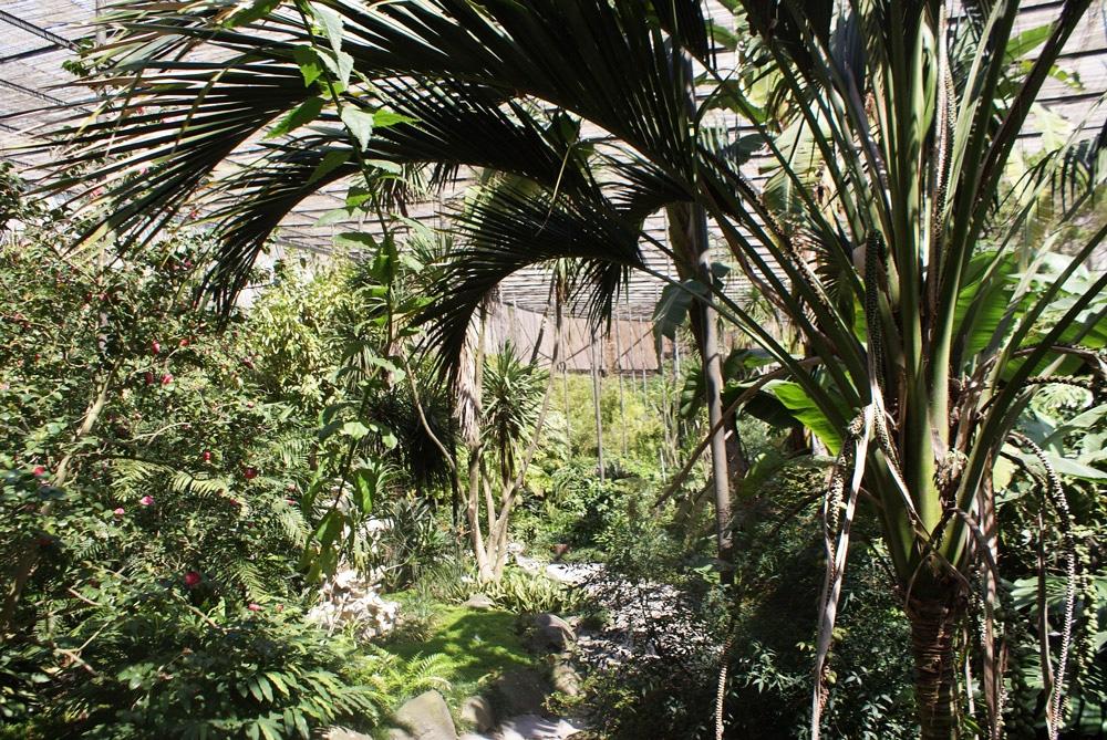 Jardin botanique d'Estufa fria à Lisbonne.