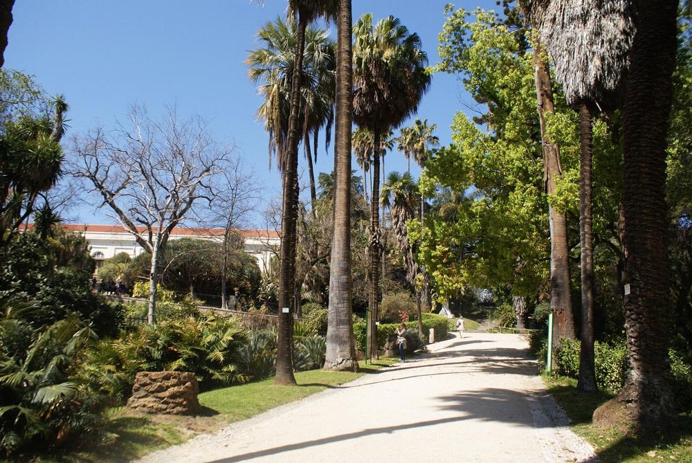Allée de palmiers dans le jardin botanique de l'Université de Lisbonne