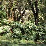 Jardin botanique de Lisbonne : Palmiers et tropiques [Principe Real]