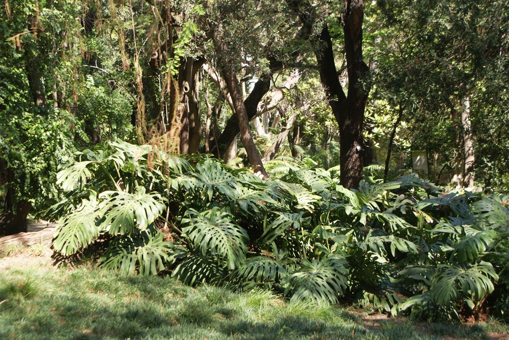 Jardin botanique de l'Université de Lisbonne