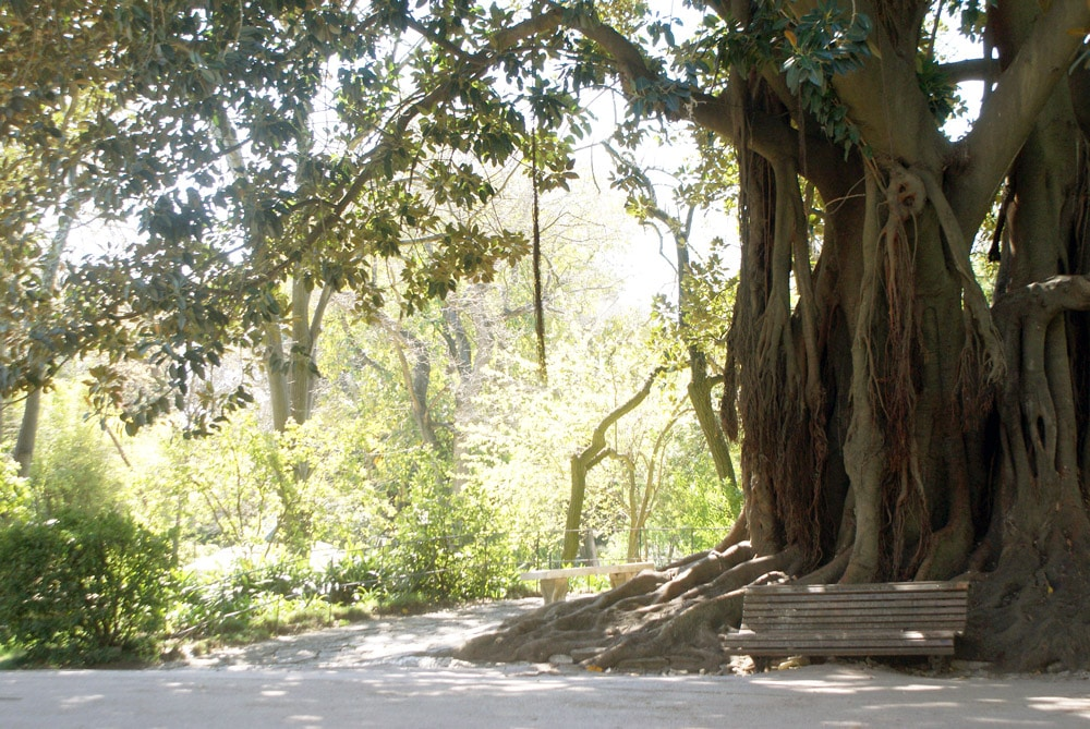Jardin d'Estrela à Lisbonne : Le jardin préféré des Lisboètes [Estrela]