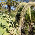 Jardin des Necessidades à Lisbonne : Royaume des cactus