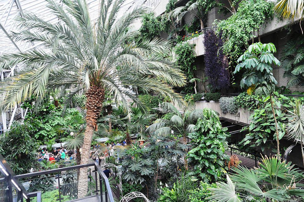 Dans la Barbican Conservatory de Londres - Photo de Ra Boe Wikipedia