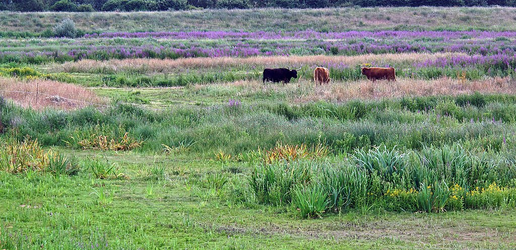 London Wetland Centre, zone humide et réserve naturelle à Londres - Photo de Brain Gillman
