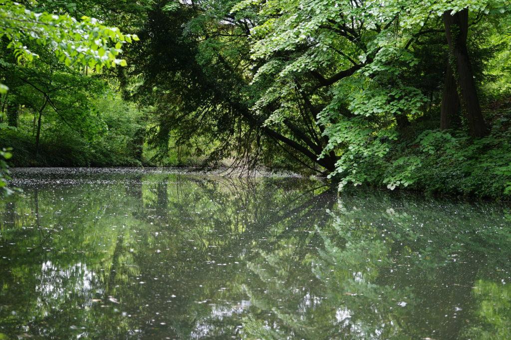 Lac du Parc de la Tête d'Or à Lyon.