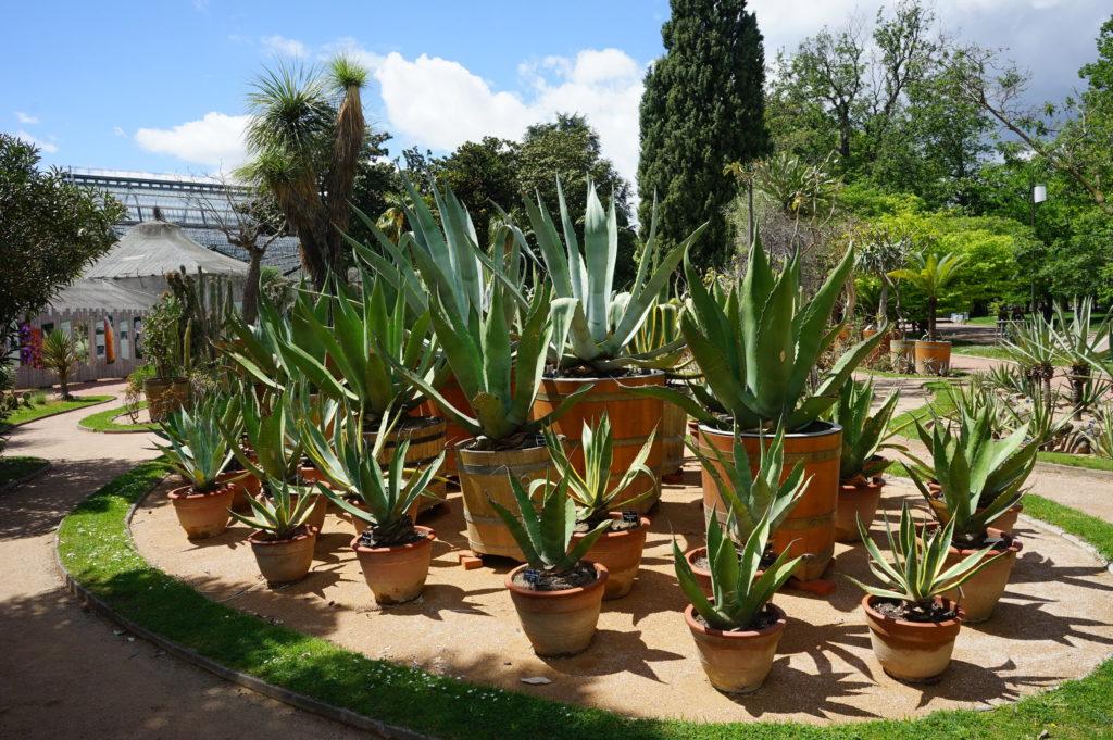 Jardin mexicain du jardin botanique du Parc de la Tête d'Or à Lyon.