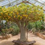 Jardin botanique de Lyon : Génial ! [Tête d'or]