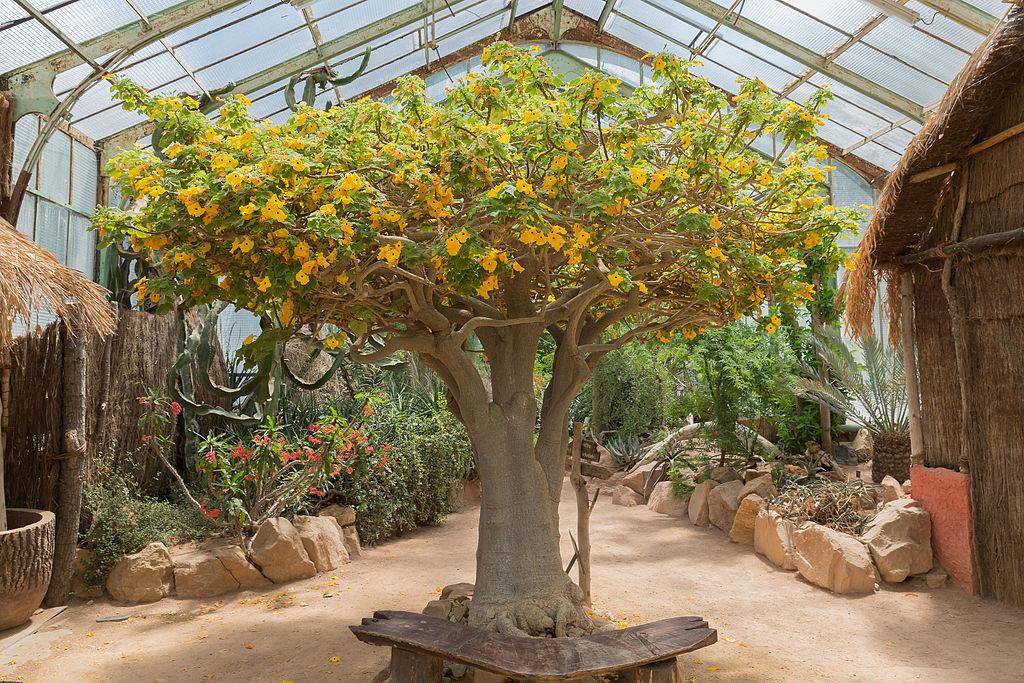 Dans une des serres du jardin botanique du parc de la Tête d'Or à Lyon - Photo de Medium69 William Crochot