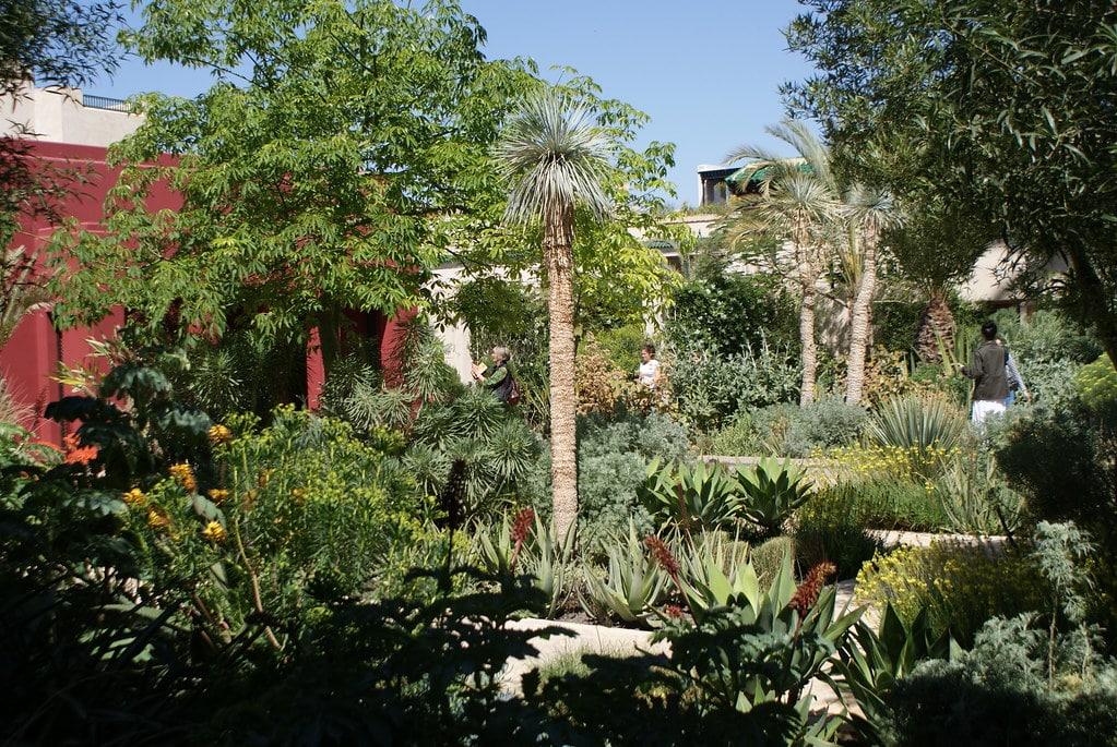Jardin exotique dans le Jardin secret de la Médina à Marrakech.