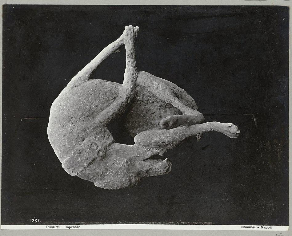 Moulage de plâtre d'une victime de l'éruption du Vésuve : Un chien enchainé.