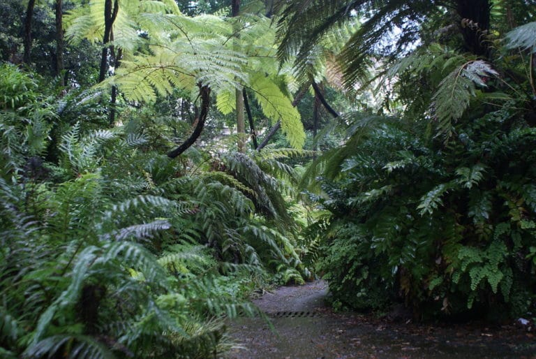 Dans la forêt de fougères arborescentes du jardin botanique de Naples.