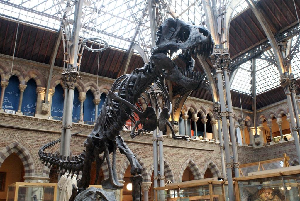 Squelette d'un tyrannosaure au musée d'histoires naturelle d'Oxford.