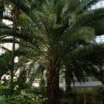 Jardin botanique de Riga : Des belles surprises ! [Pardagauva]