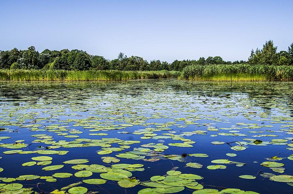 Lac Ķīšezers du parc de Mezaparks au nord de Riga. Photo de BirdsEyeLV