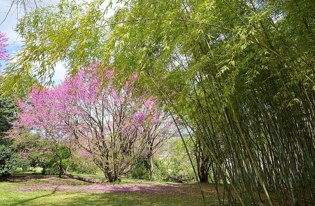 Dans le jardin botanique de Rome dans le quartier de Trastevere - Photo de Daderot