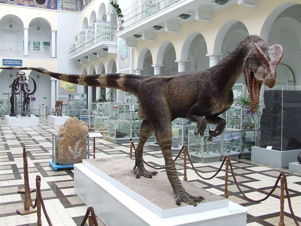 """Dinosaure """"Dilophosaurus wetherilli"""" du musée de géologie de Varsovie - Photo de Hiuppo"""