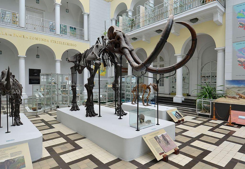 Squelette de mammouth laineux au musée de géologie de Varsovie - Photo d'Adrian Grycuk