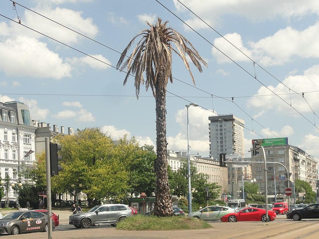 Palme de Varsovie : Ici dans sa version séchée pour sensibiliser sur le changement climatique.